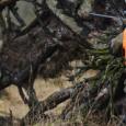 Veste harkila wild boar pro hunter hartika